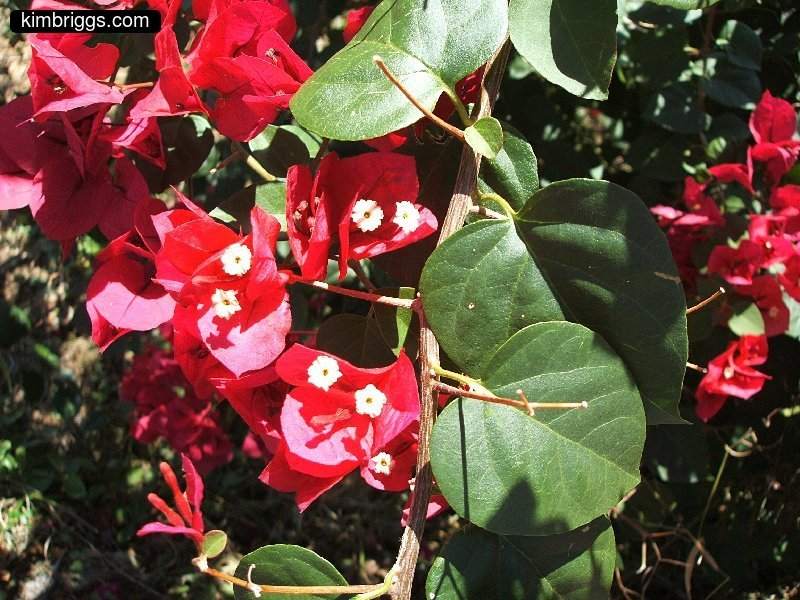 Tropical Island Flowers: Tropical Flowers