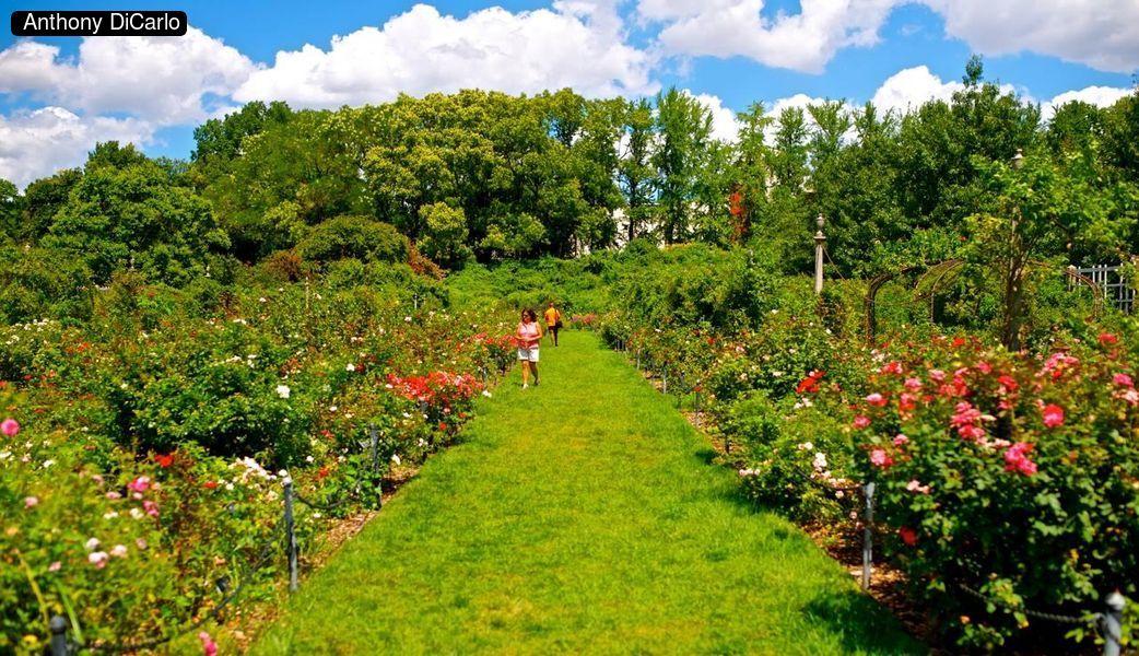 Brooklyn Botanical Gardens - kimbriggs.com