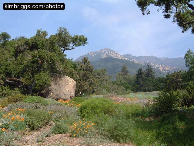 santa barbara botanical garden photos california