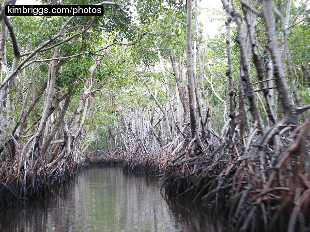 Best Everglades Airboat Tours Near Miami
