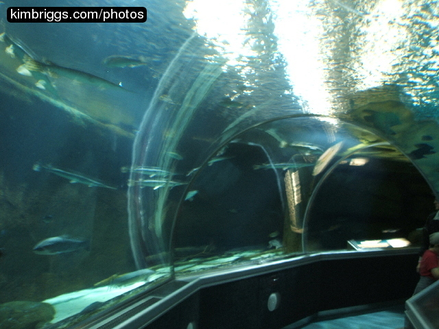 underwater adventures aquarium photos mall of america minnesota