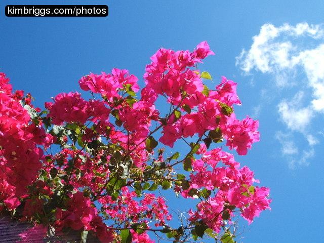 Tropical Island Flowers: Tropical Flowers Photos: St. John USVI