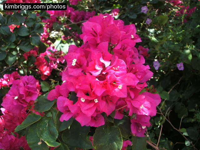 Tropical Flower Names Tropical Flowers Photo st