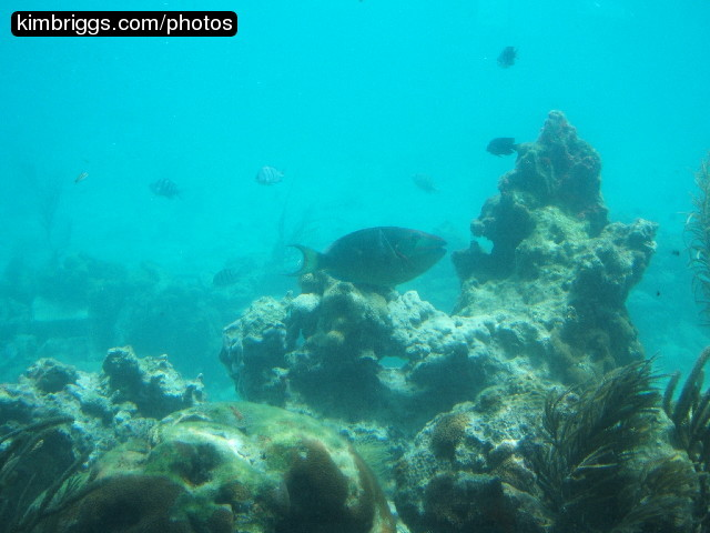 Virgin Islands Coral Reef National Monument Average Precipitation