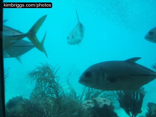 Fish Tails St Thomas Virgin Islands