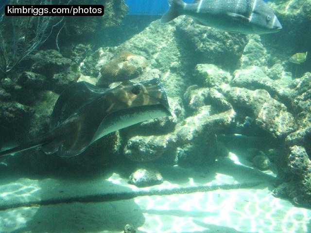 Image Result For World Aquarium St